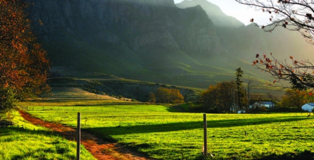 Taste the Cape Wines