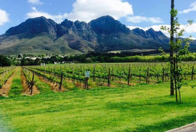 Somerset West Wine Estates Experience